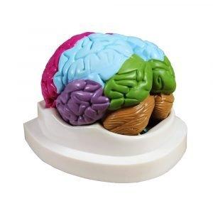 PL1224 (Mozak, 2 dijela)